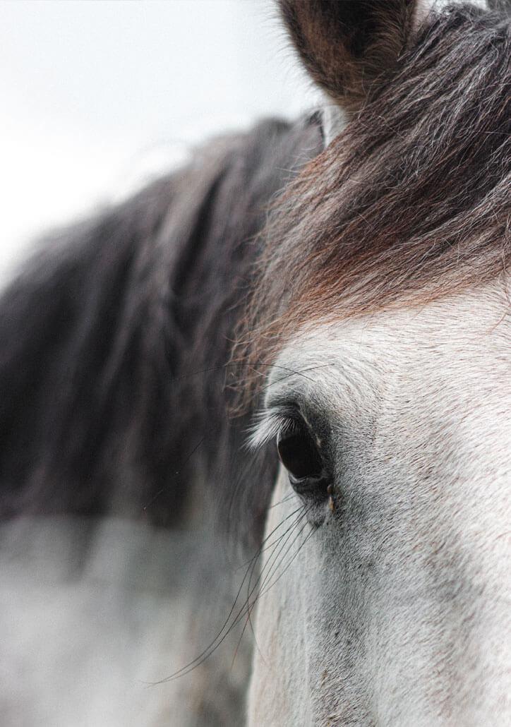 ganzheitliche Ausbidlung für Pferd und Reiter