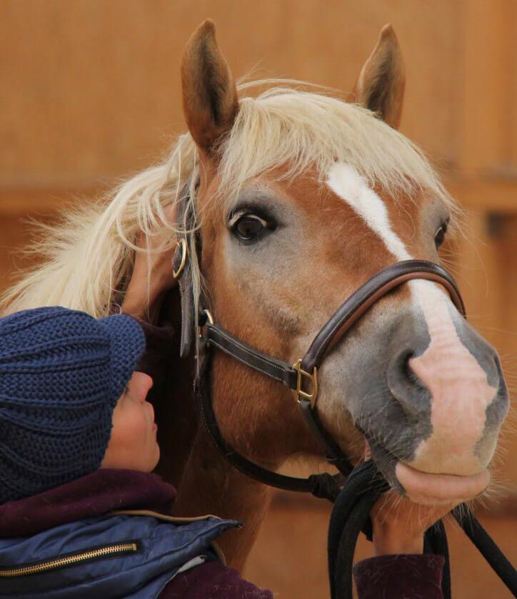 Sonja Kutter bei der Behandlung eines Pferdes