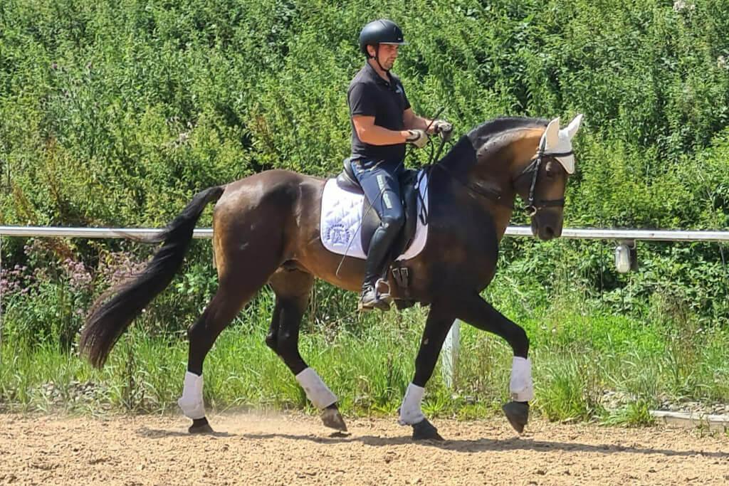 home_ausbildungvonPferden