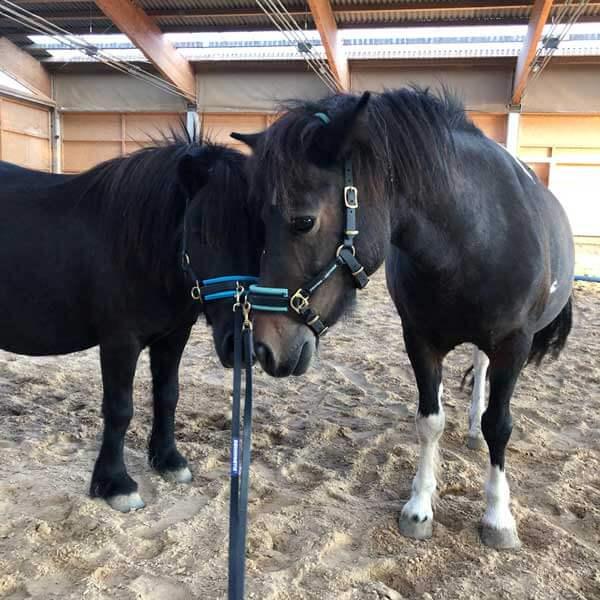 Ponybande